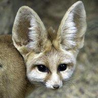 Foxy42